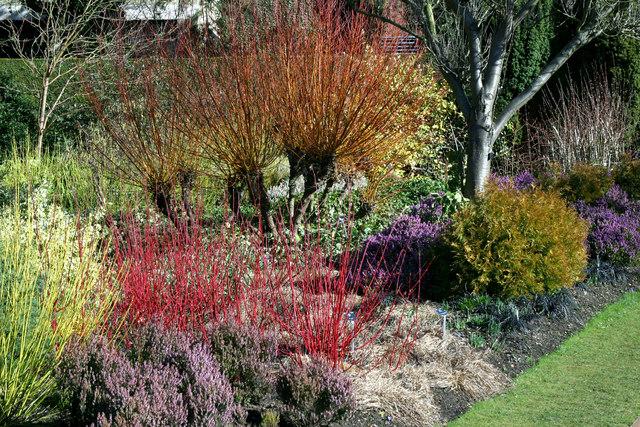 The Winter Gardens at Cambridge University Botanical Gardens by Stuart Logan CC0.2